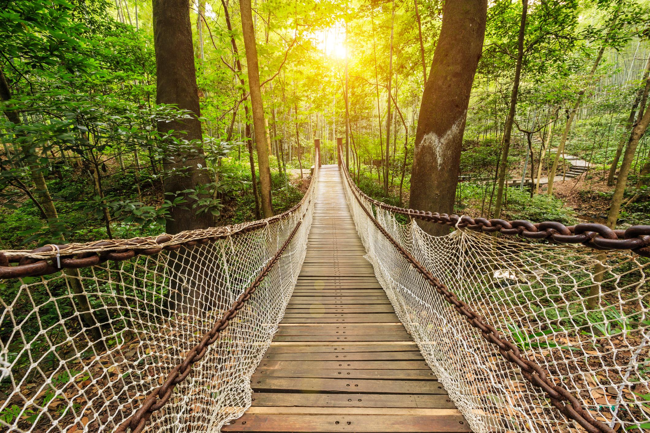 Suspension bridge in the quiet forest